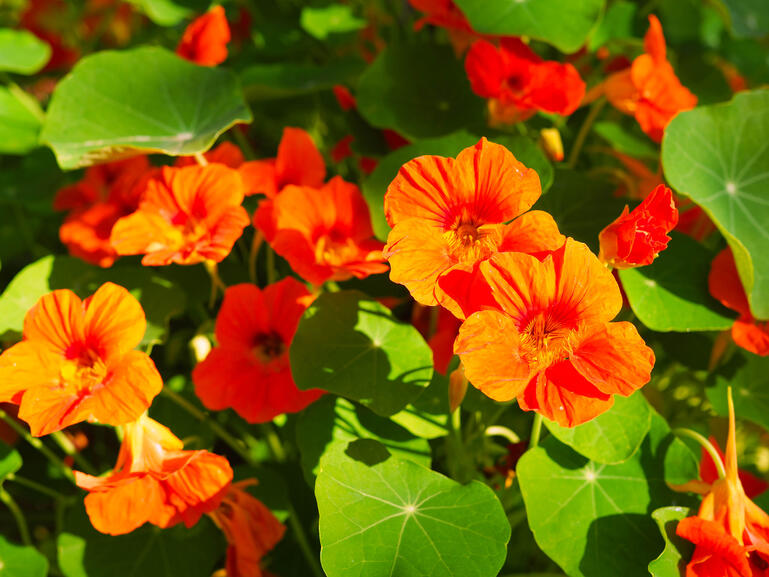 bigstock-Bright-Blooming-Shrub-With-Flo-324401551