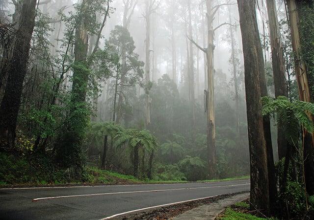 fog-5076463